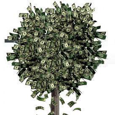 TheBaron Investing picture