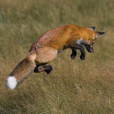 Pounce Investing picture