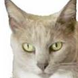 Stock Cat picture